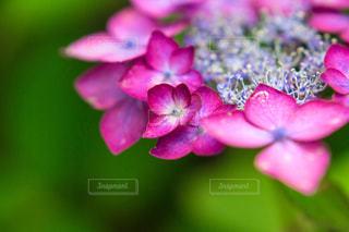 花の写真・画像素材[554648]