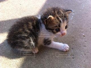 可愛い子猫の写真・画像素材[724802]