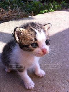 可愛い子猫 - No.724803