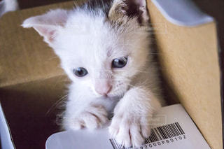 箱で遊ぶ子猫 - No.726973