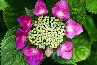 近くの花のアップ - No.1205479