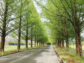 道の端に木のパスの写真・画像素材[788329]