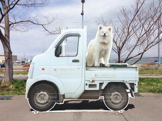 犬の写真・画像素材[174514]