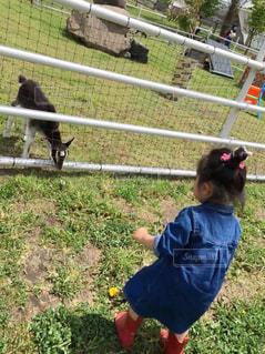 フェンスの前に立っている小さな男の子の写真・画像素材[2416559]