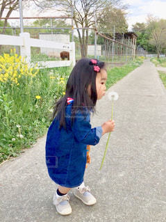 綿毛を飛ばそうとしている小さな女の子の写真・画像素材[2416715]