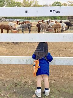 動物を見ている小さな女の子の写真・画像素材[2416716]