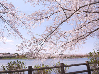 春の景色の写真・画像素材[3082089]