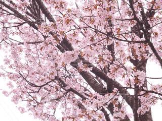 木のクローズアップの写真・画像素材[3082085]
