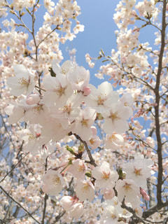 花のクローズアップの写真・画像素材[3082084]