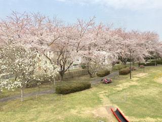 滑り台から見下ろす桜の写真・画像素材[3082088]