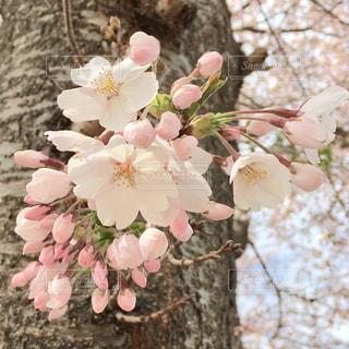 植物の上のピンクの花の写真・画像素材[3082087]