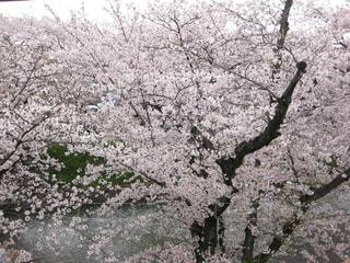 春の写真・画像素材[425938]