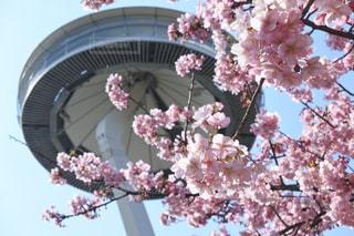 春の写真・画像素材[547298]