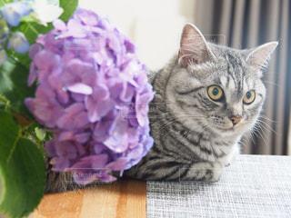 テーブルの上に座って猫の写真・画像素材[975547]