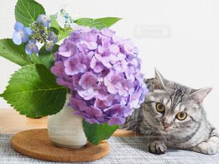 花の上に横になっている猫の写真・画像素材[1222415]