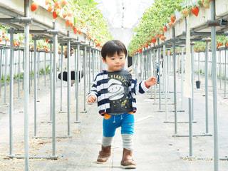 フェンスの横に立っている小さな男の子の写真・画像素材[1281752]