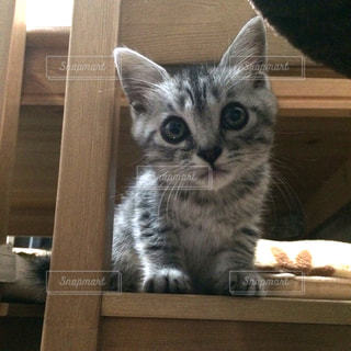 木製のテーブルの上に座っている猫の写真・画像素材[2294620]