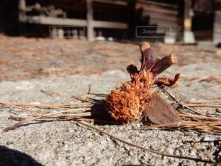 秋の写真・画像素材[294636]