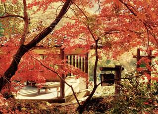 紅葉の中の休憩処の写真・画像素材[881884]