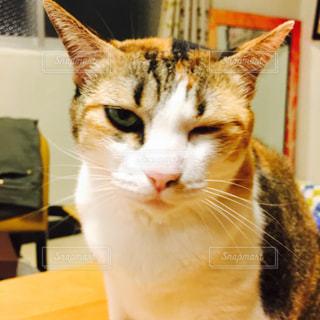 猫の写真・画像素材[300214]