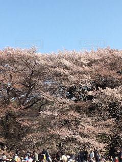 屋外,東京,樹木,砧公園,2018.3.31