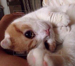 猫のクローズアップの写真・画像素材[2291357]