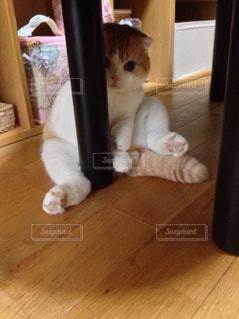 床に座っている猫の写真・画像素材[2291827]