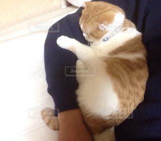 猫,動物,ペット,人物,ネコ,腕まくら
