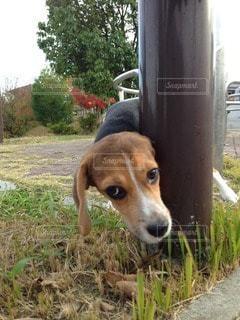 犬の写真・画像素材[28620]