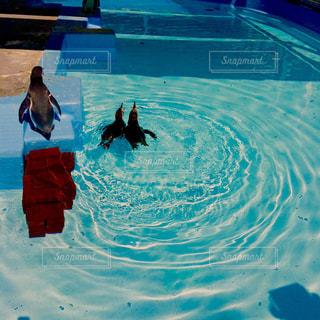 水のプールを泳ぐ人たちのグループの写真・画像素材[1351751]