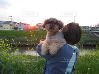 犬 - No.445241