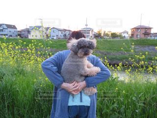 犬 - No.445244