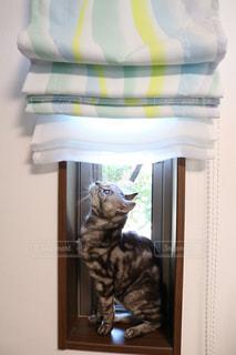 猫の写真・画像素材[609586]