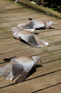 木製のベンチに座っている鳥の写真・画像素材[744009]