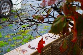 木の枝に座っている鳥の写真・画像素材[819948]