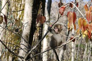 木の枝に小鳥の写真・画像素材[858510]