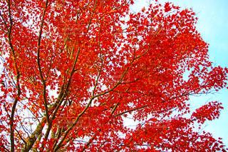 近くの木のアップの写真・画像素材[891163]