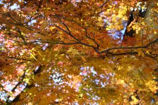 近くの木のアップの写真・画像素材[891172]