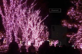 空に花火の写真・画像素材[921265]