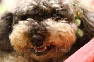 近くに犬のアップの写真・画像素材[944131]