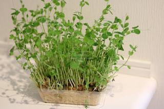 植物の花の花瓶 - No.967864