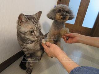 猫を持っている人 - No.985391