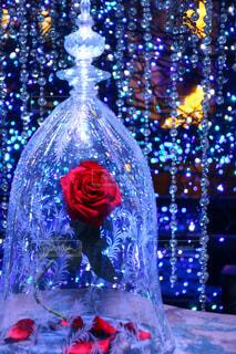 バラ,ガラス瓶,ディズニー
