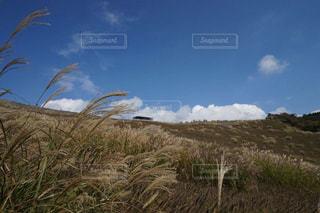 近くに草が茂った丘のアップの写真・画像素材[1108930]