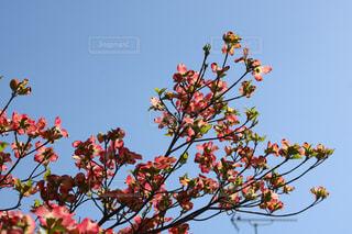木の枝に花の花瓶 - No.1116024