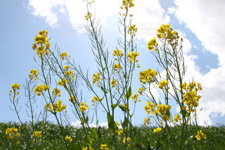 黄色の花 - No.1116459