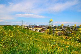 近くに緑豊かな緑のフィールドの - No.1116484