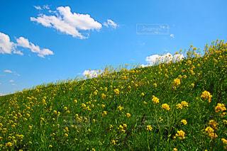 フィールド内の黄色の花 - No.1116761