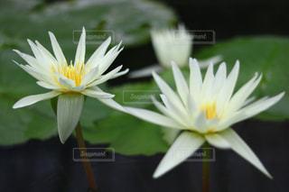 近くの花のアップ - No.1127762