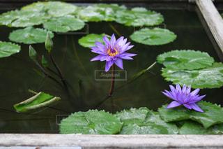 水の中から成長している緑の植物 - No.1127765